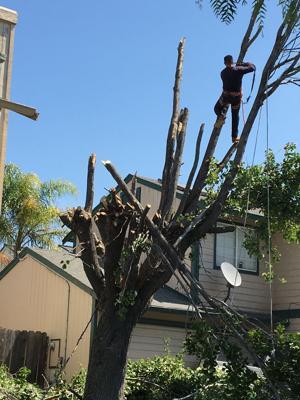 Pic 1 John's Tree Service - Tree Trimming