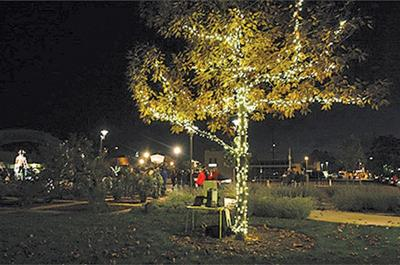 Hoe East Bay Tree Of Lights Ceremony News Thepress