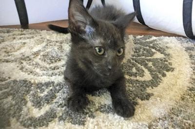 Adopt a pet: Meet Don Juan