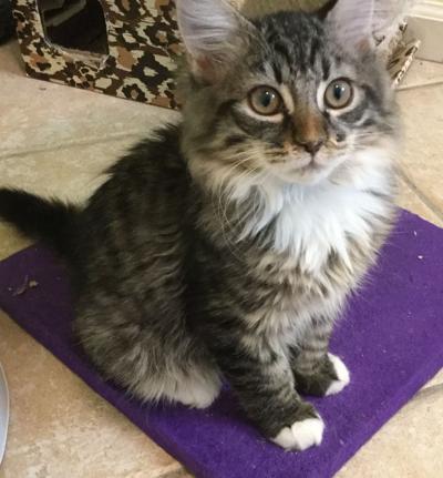 Adopt a pet: Meet Ziggy