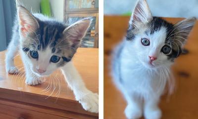 Adopt a pet: Meet Buttons & Blotzi