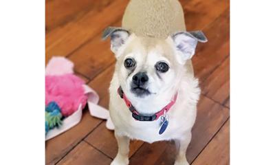 Adopt a pet: Meet Max