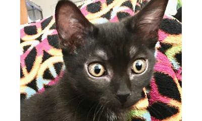 Adopt a pet: Meet Angus