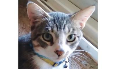 Adopt a pet: Meet Tuffy