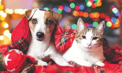 Keeping the holidays safe in pet-friendly homes
