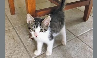 Adopt a pet: Meet Garcia