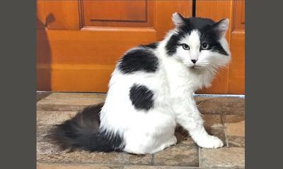 Adopt a pet: Meet Mommy Cat