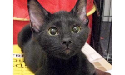 Adopt a pet: Meet Charlie