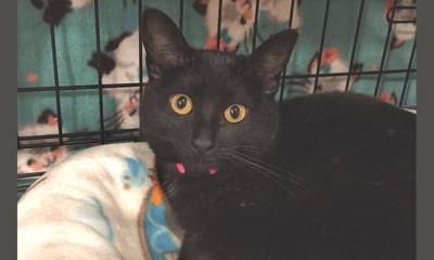 Adopt a pet: Meet Penny