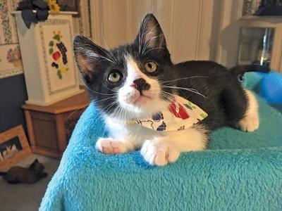Adopt a pet: Meet Pete