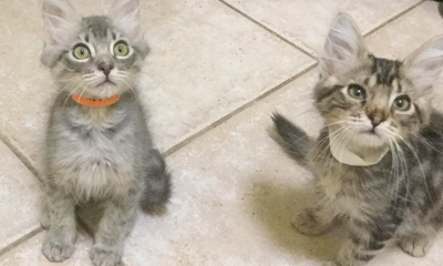 Adopt a pet: Meet Teddy and Woody
