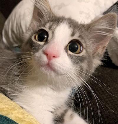 Adopt a pet: Meet Skye