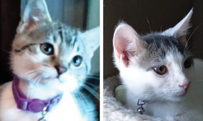 Adopt a pet: Meet Moon and Hayley
