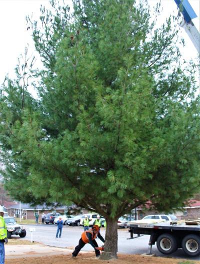 Gov tree