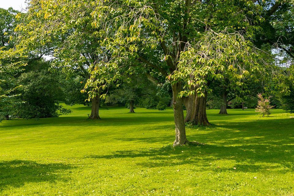 trees-3659132_960_720