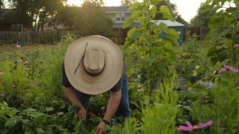 City aims to help grow community garden