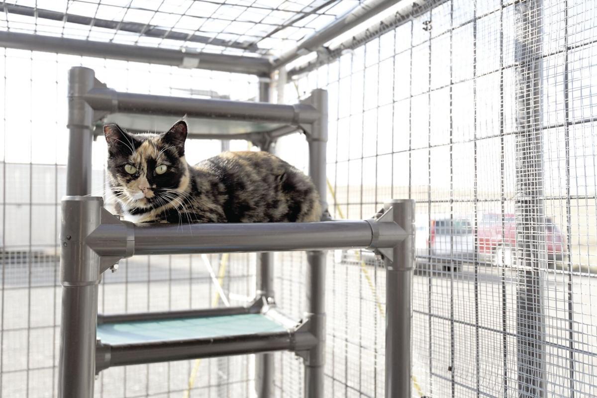 COVID-19's impact on pet adoptions