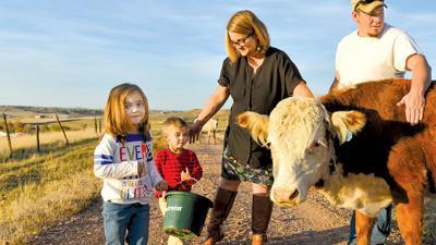 Swinyer family feeds cows Destination Sheridan