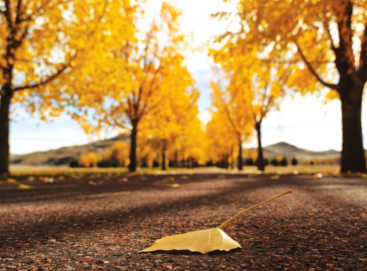 ucross fall colors