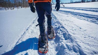 snowshoe stock
