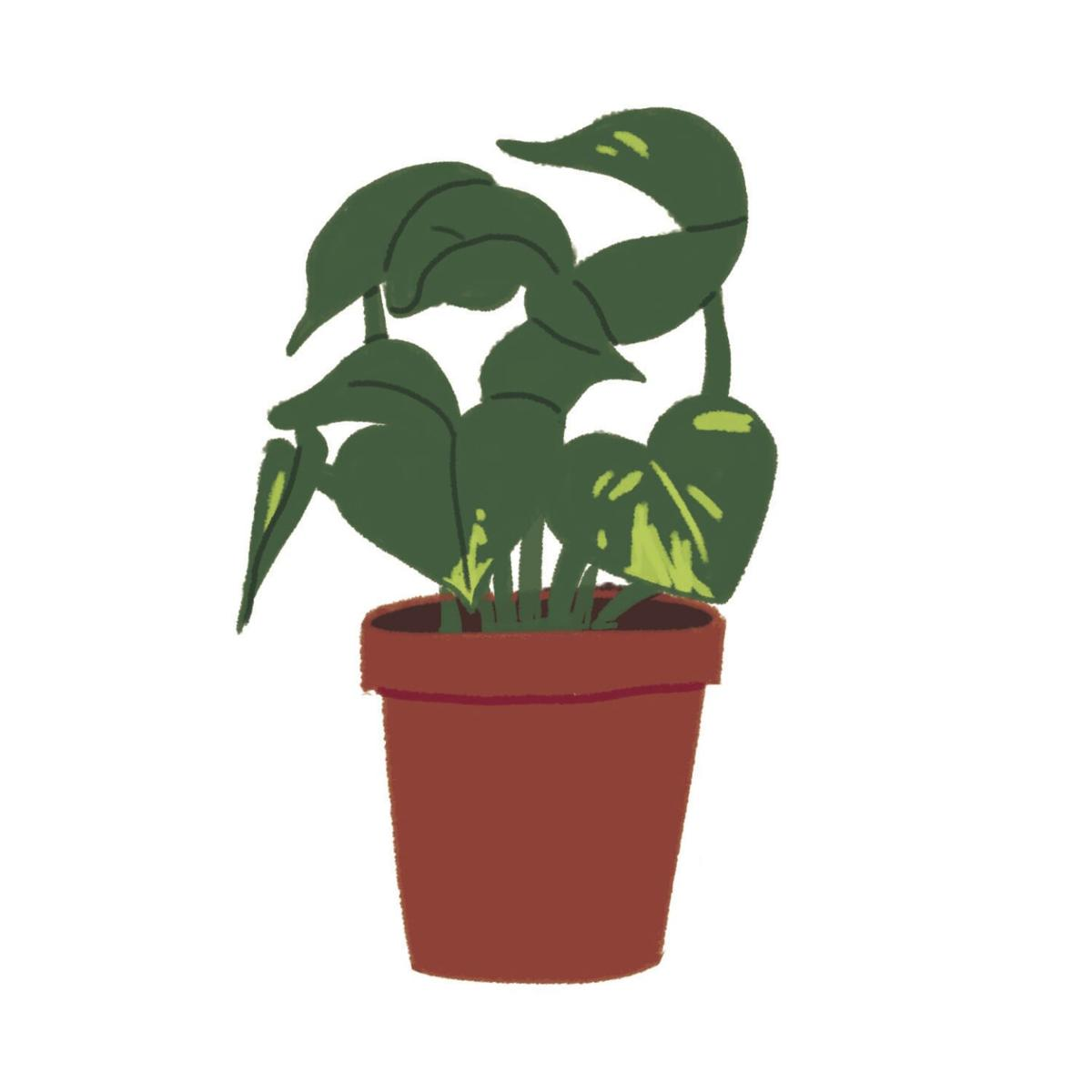 Plant parenting 101: the easiest plants for students to raise