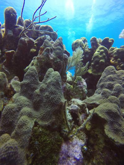 UTA biology professor researches how to fight new disease damaging coral reefs