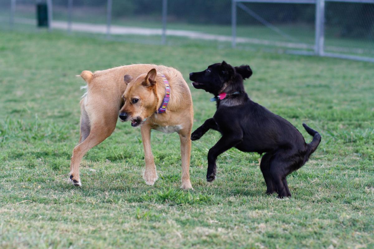 nws.dogsafety9.js.7.11.16