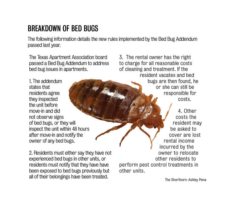 Bed bugs plague tenants news theshorthorn bed bugs spiritdancerdesigns Gallery
