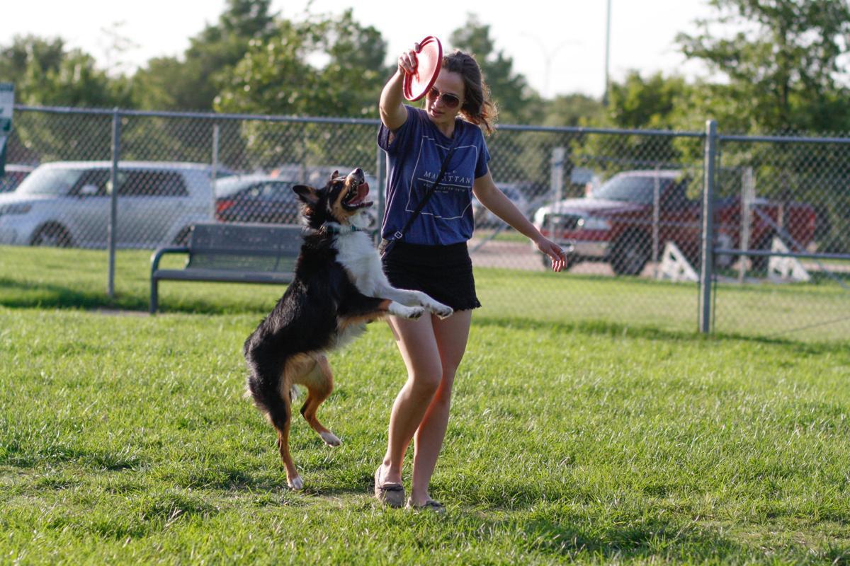 nws.dogsafety10.js.7.11.16