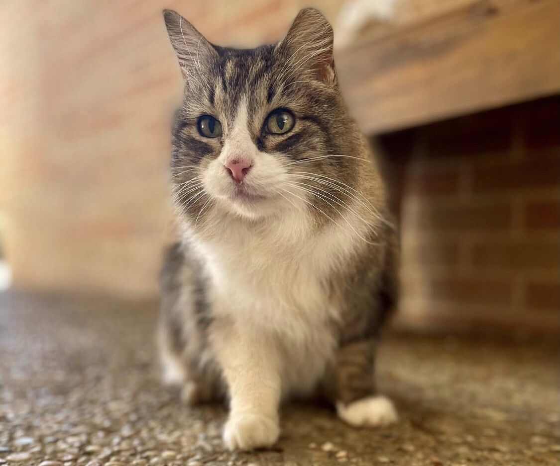 Remembering Riley: Well known cat at UTA presumed dead after being missing for weeks
