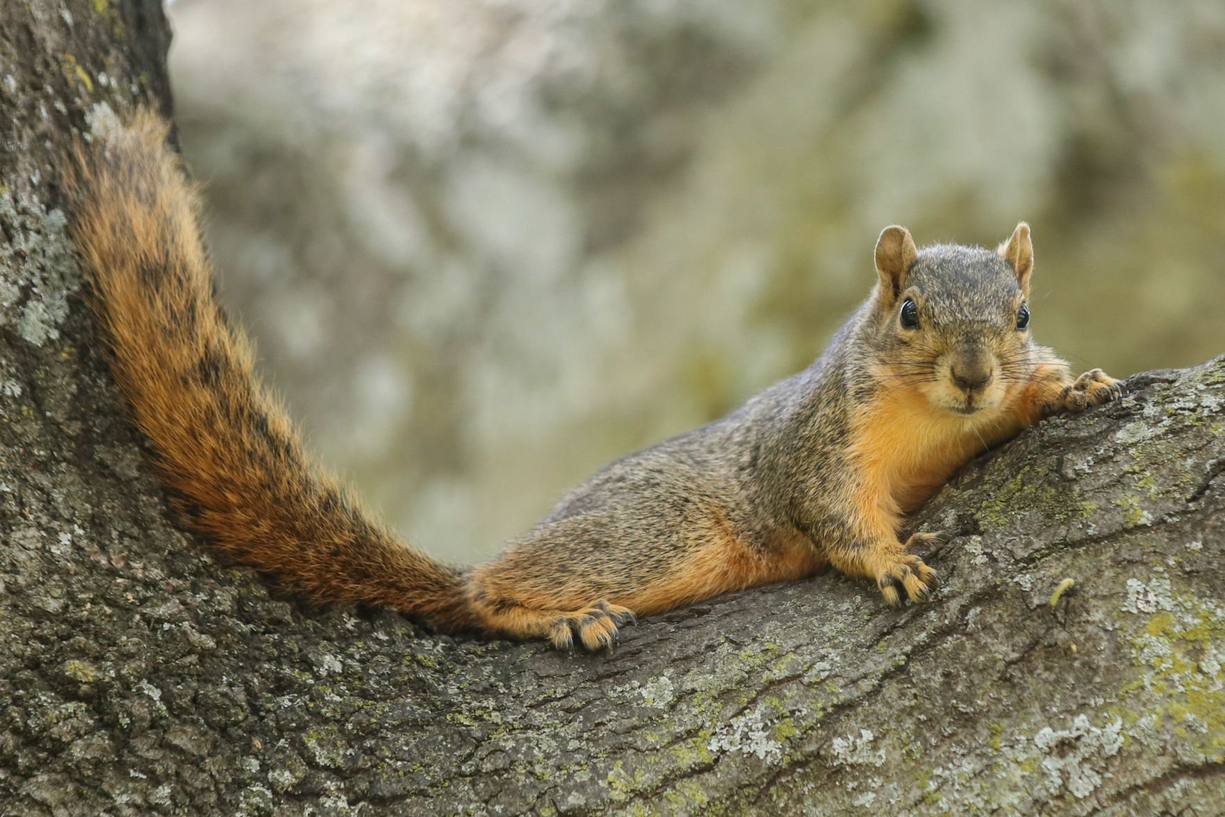 UTA's squirrels: fuzzy friends or feisty foes?