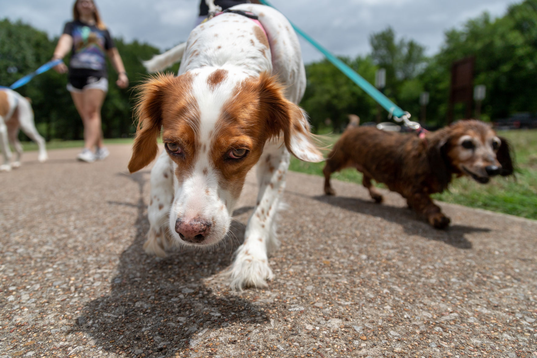 Hot dog: how to keep your pets safe during the summer