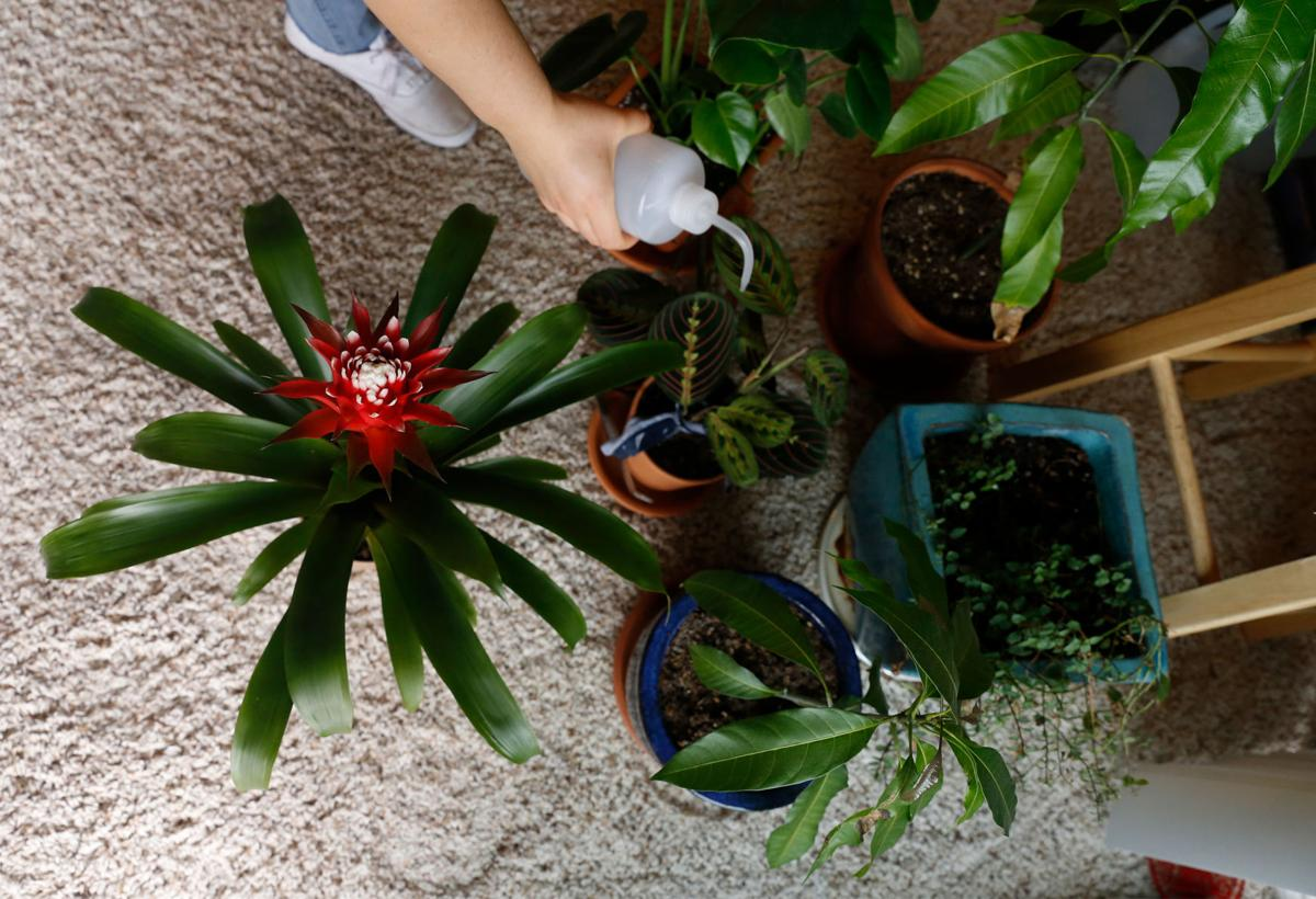 Educate before you decorate with plants