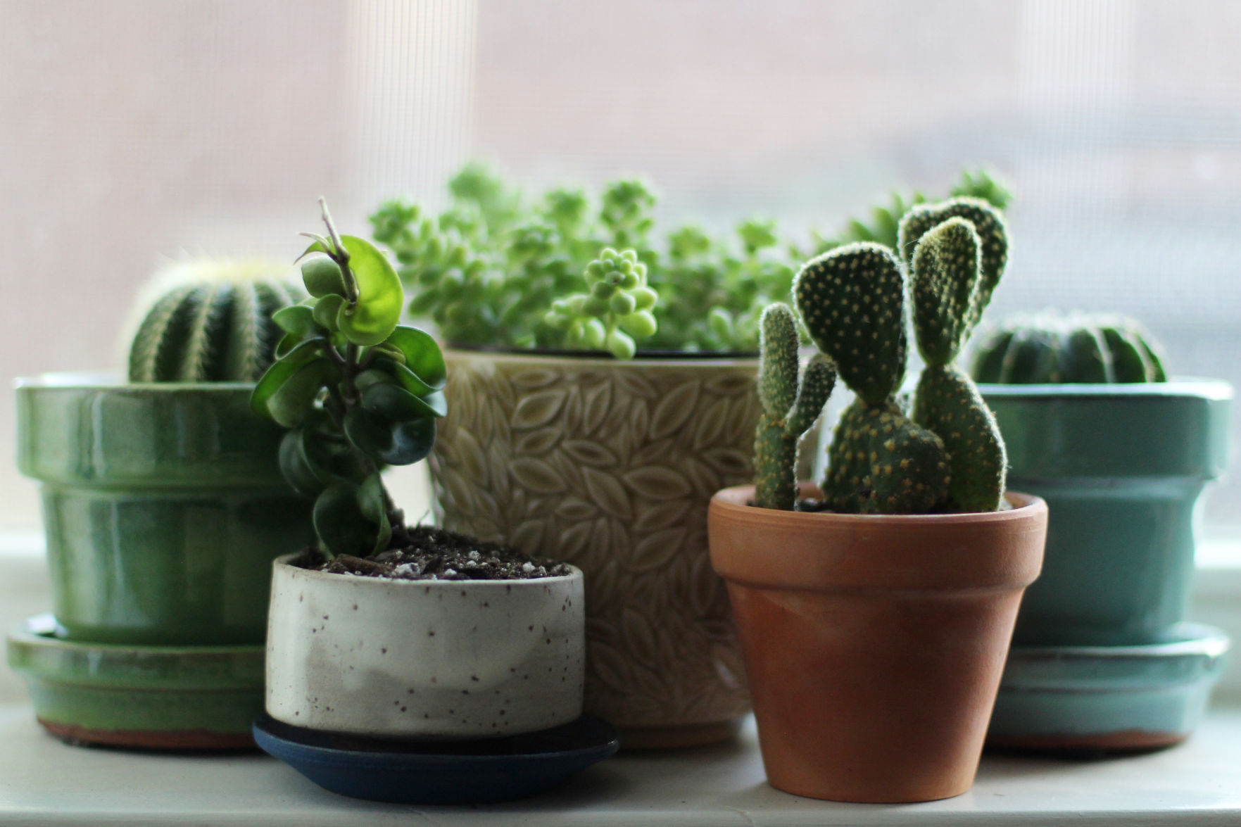 Opinion: In a time of uncertainty, my plants remain a constant
