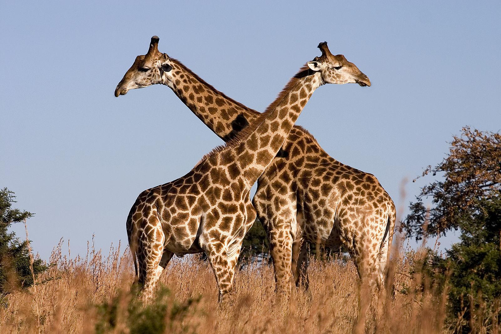 Wildwatch Kenya