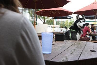 Arlington restaurants make room for four-legged friends
