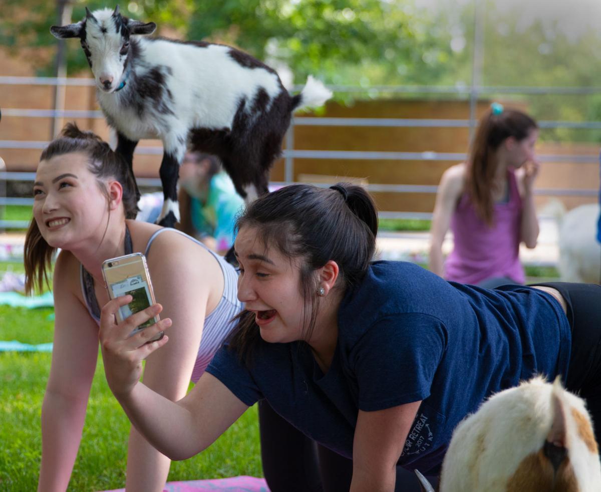 Goat yoga helps students de-stress before finals
