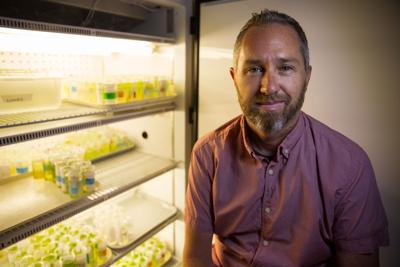 UTA associate professor receives national award for work on evolution in natural systems