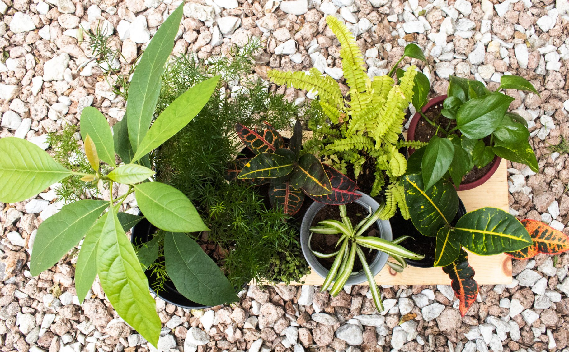 A gardening guide for new plant parents