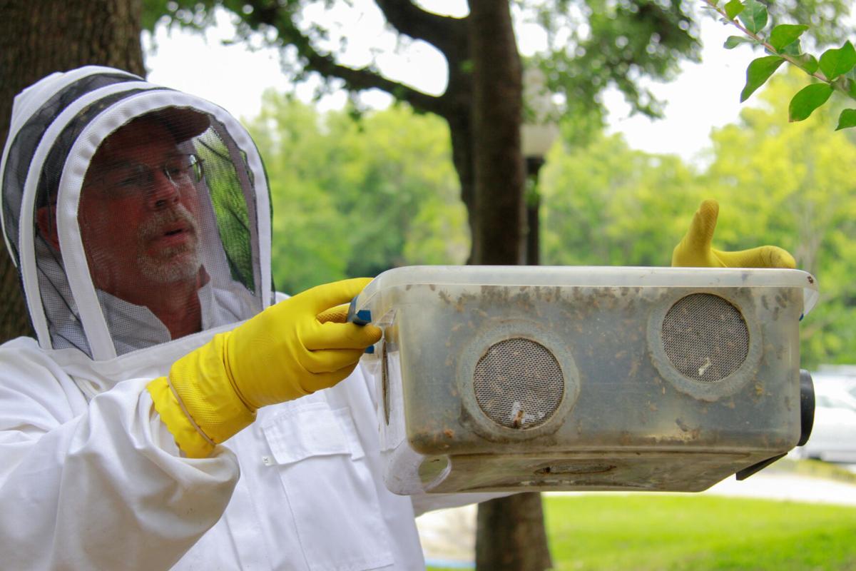 Beekeeping UTA alumnus protects his hives through rain, snow and a pandemic