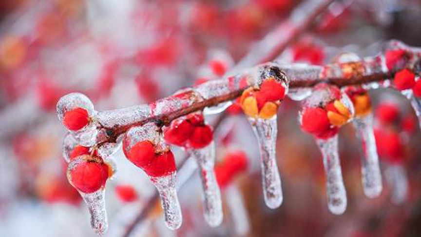 Freezing rain warning issued for Montreal