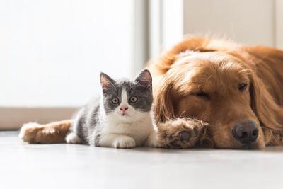 Pet Talk: Spring pet care