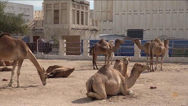 Daniela Caputo's Destinations: Adventures in the Middle East - Doha, Qatar Part 1