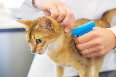 Microchips keep families together