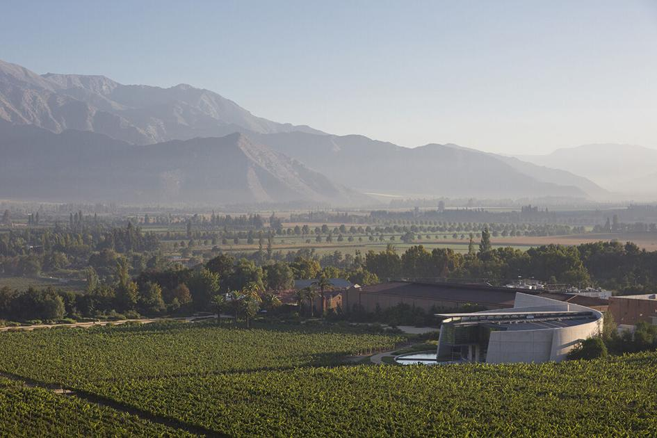 Mandi Robertson: What makes the Max wines of Erraruriz, Chile so distinct?