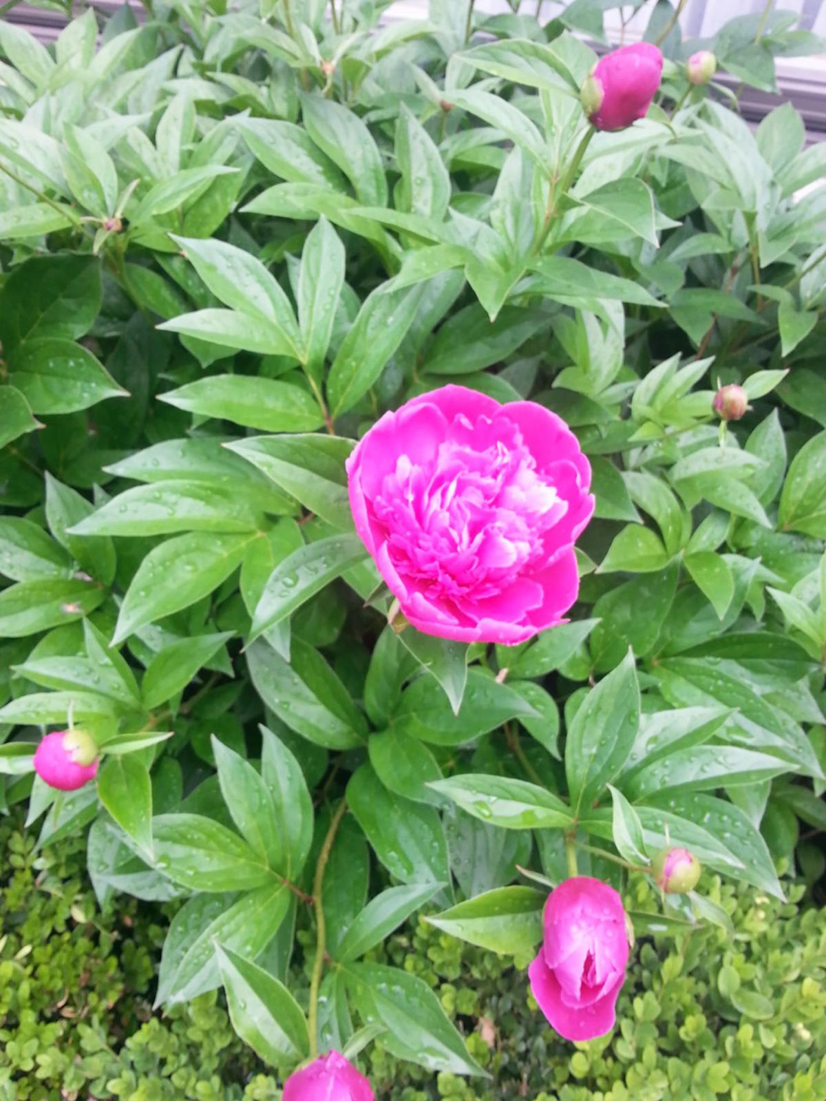Elaine Sanders: It's time to divide perennials and pull your garden together