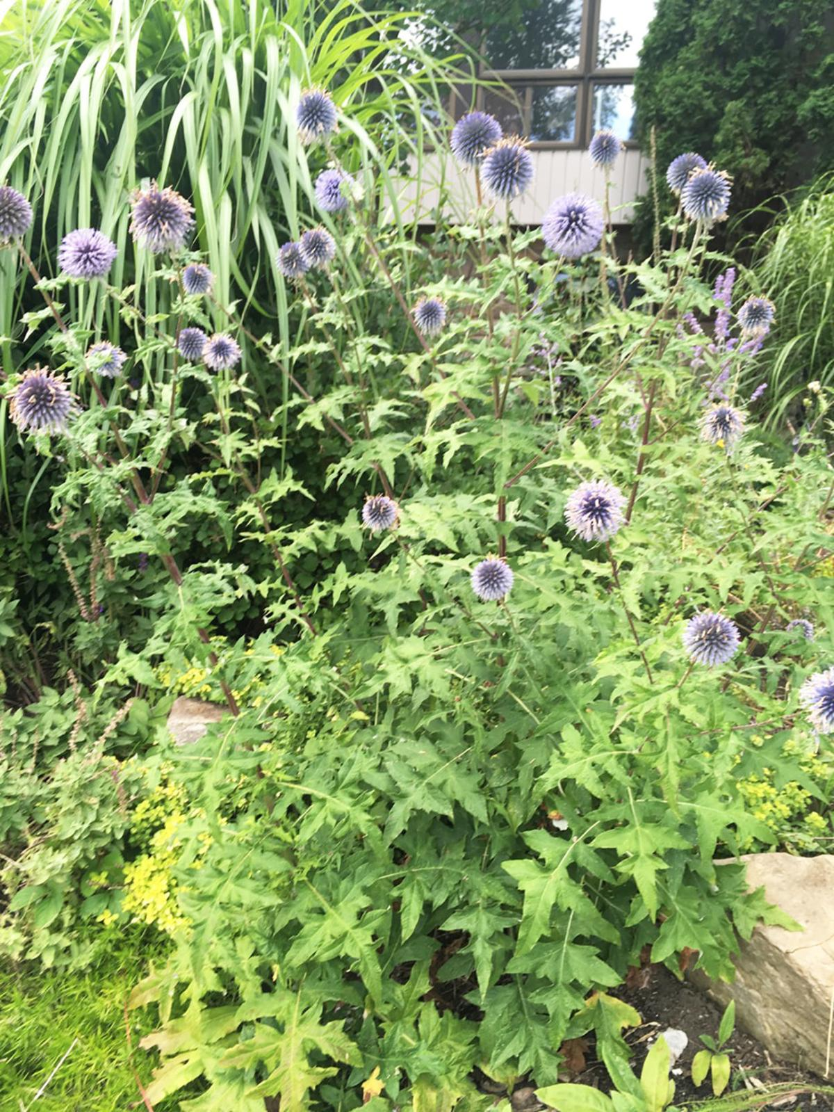Elaine Sanders: Plants that take the heat