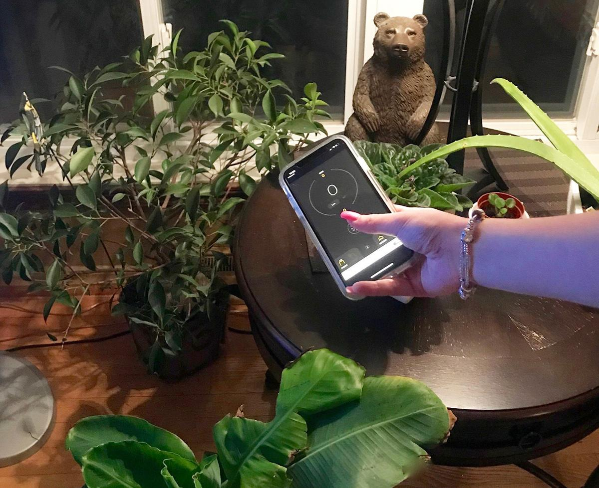 Elaine Sanders: The key to success with houseplants in winter is water, air and light