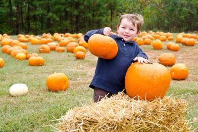 Melany Of MList: Picking the perfect pumpkin