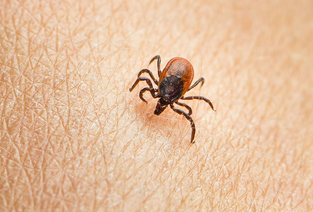 Dr. Mitch Shulman: West Nile, Lyme — COVID-19 isn't the only infectious disease to be careful about this summer